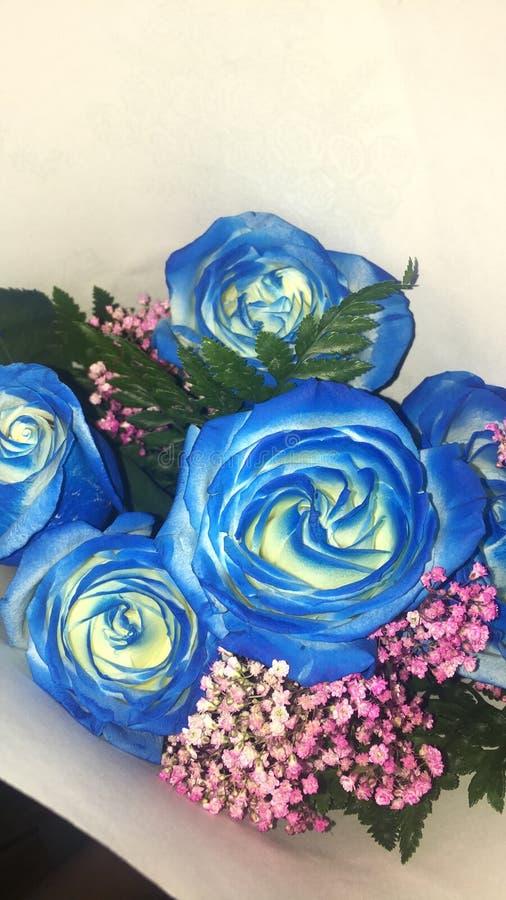 μπλε τριαντάφυλλα στοκ εικόνες