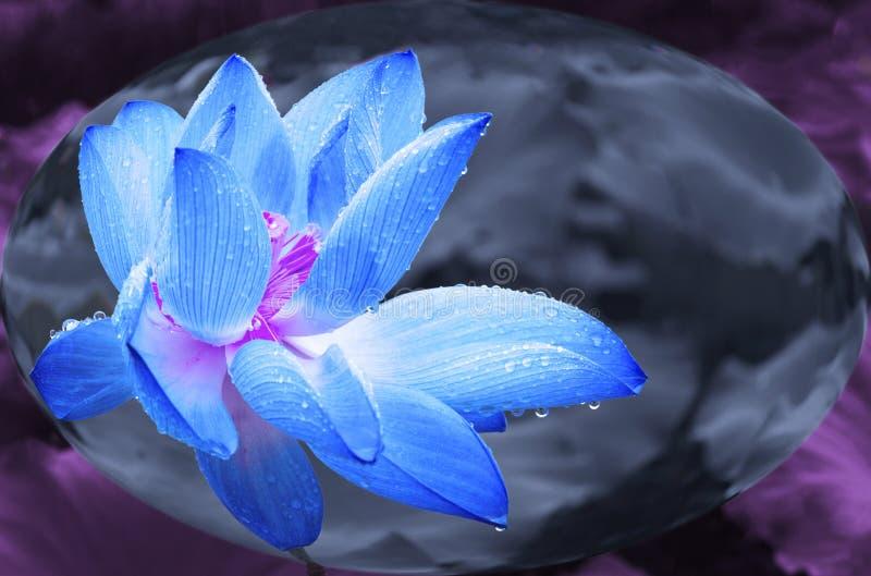 Μπλε λωτός στη σφαίρα κρυστάλλου στοκ εικόνες με δικαίωμα ελεύθερης χρήσης