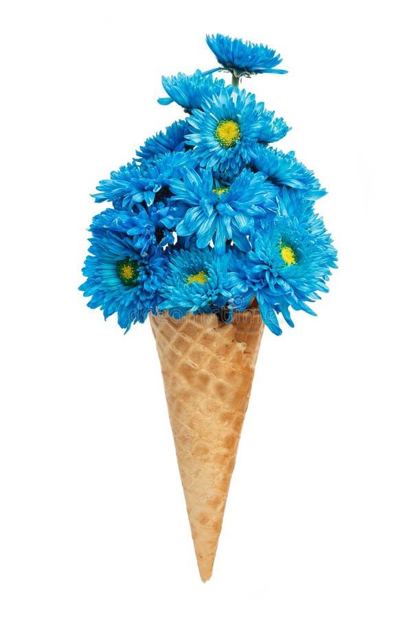 Μπλε όμορφος φρέσκος λουλουδιών κώνων παγωτού χρυσάνθεμων στοκ εικόνα με δικαίωμα ελεύθερης χρήσης
