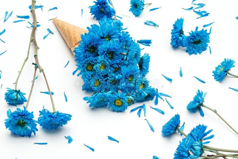 Μπλε όμορφος φρέσκος λουλουδιών κώνων παγωτού χρυσάνθεμων στοκ εικόνες με δικαίωμα ελεύθερης χρήσης