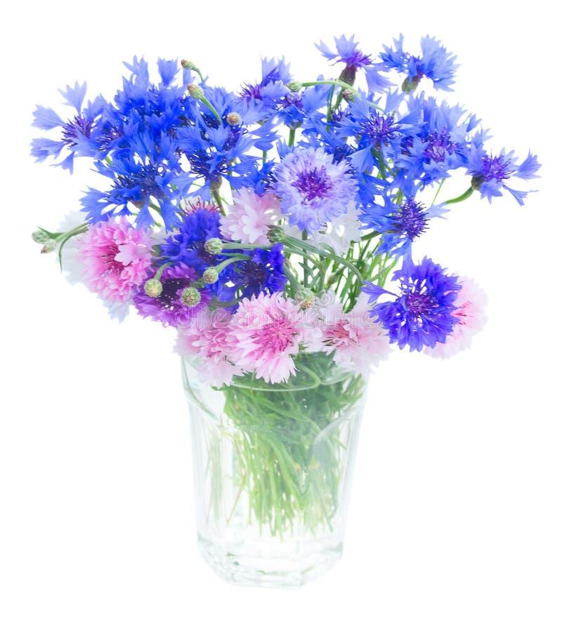 Μπλε cornflowers στο λευκό στοκ εικόνες