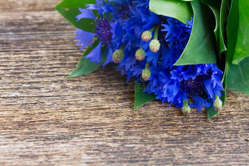 μπλε cornflowers στοκ φωτογραφία με δικαίωμα ελεύθερης χρήσης