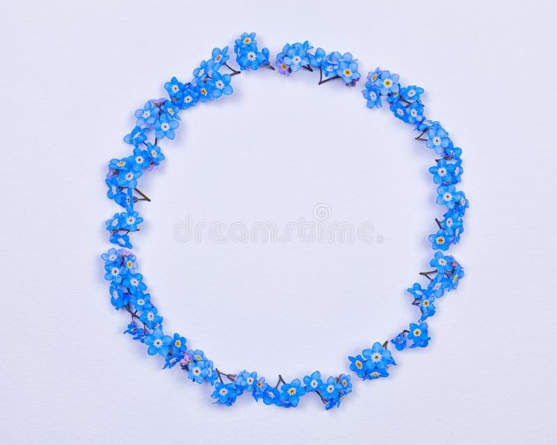 Μπλε forget-me-not λουλούδια που τακτοποιούνται σε έναν κύκλο στοκ φωτογραφίες