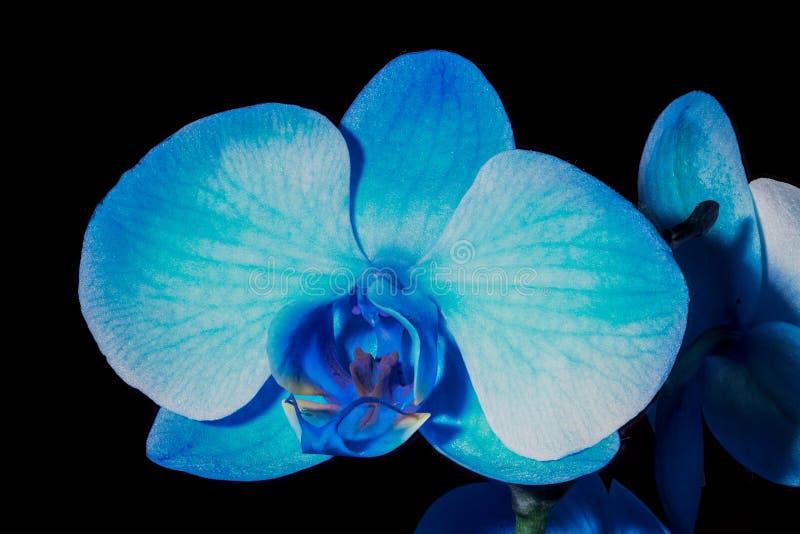 μπλε orchid λουλουδιών στοκ φωτογραφία με δικαίωμα ελεύθερης χρήσης