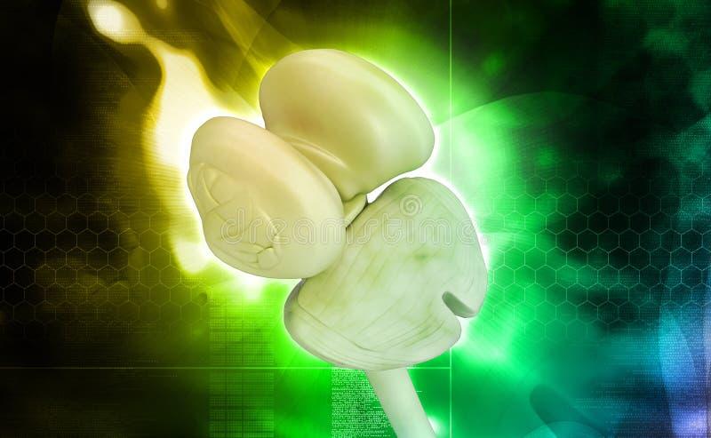 Μυελός και παρεγκεφαλίδα θαλάμων νωτιαίος απεικόνιση αποθεμάτων