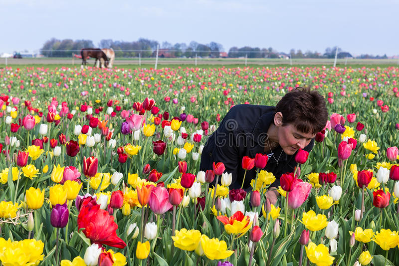 Μυρίζοντας λουλούδια γυναικών σε έναν ολλανδικό τομέα τουλιπών στοκ εικόνα