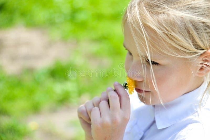 Μυρίζοντας πικραλίδα κοριτσιών στοκ εικόνες