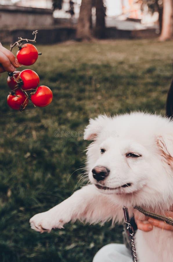 Μυρίζοντας φρούτα σκυλιών στοκ φωτογραφία με δικαίωμα ελεύθερης χρήσης