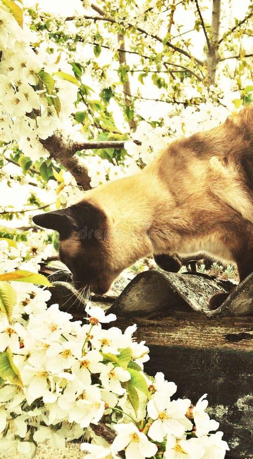 Μυρίστε το άνθος στοκ φωτογραφία με δικαίωμα ελεύθερης χρήσης