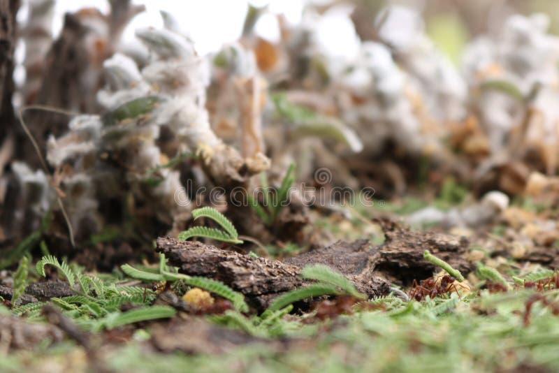 Μυρμήγκια εργασίας - μακρο πυροβολισμός στοκ εικόνες με δικαίωμα ελεύθερης χρήσης