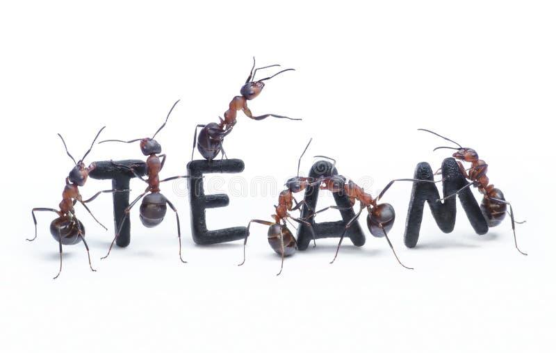 μυρμήγκια που κατασκε&upsilo στοκ εικόνες