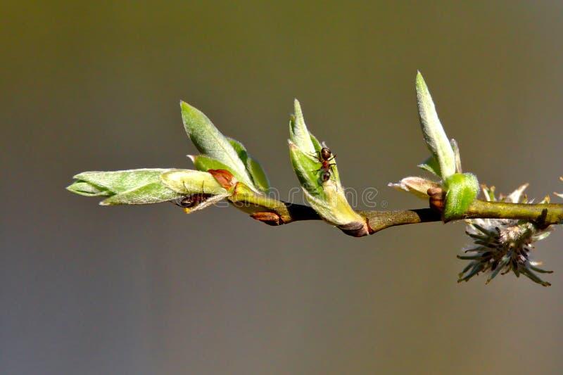 Μυρμήγκια στην εργασία στοκ φωτογραφία με δικαίωμα ελεύθερης χρήσης
