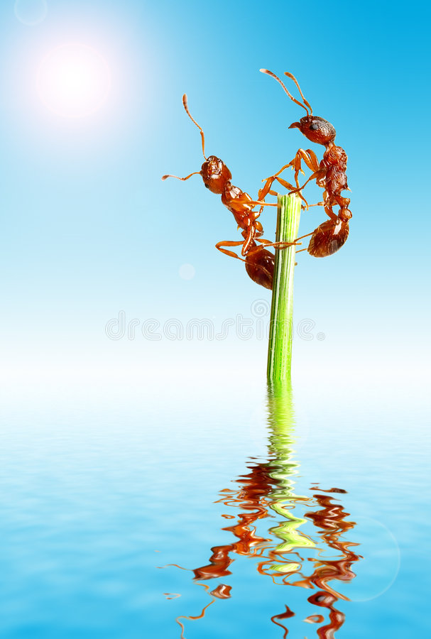μυρμήγκια στοκ εικόνα