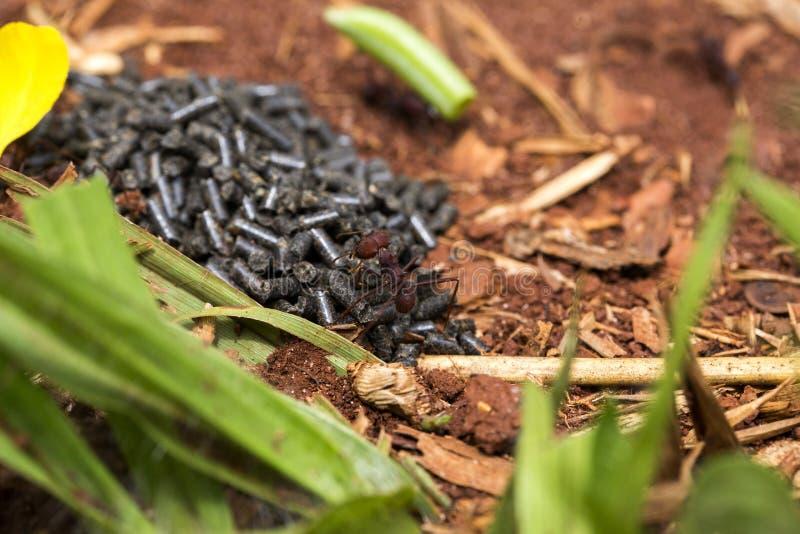 Μυρμήγκι που τρώει το δηλητήριο στοκ φωτογραφίες με δικαίωμα ελεύθερης χρήσης