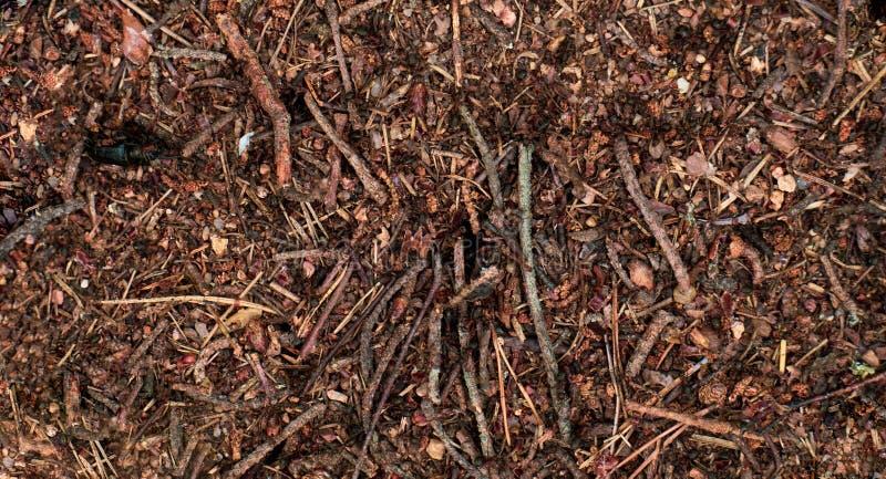 Μυρμηγκοφωλιά Η εργασία των δασικών μυρμηγκιών Συνοχή στην εργασία στοκ φωτογραφία