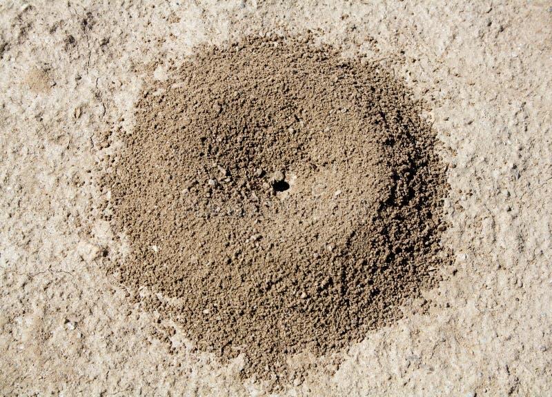 μυρμηγκοφωλιά στοκ φωτογραφίες με δικαίωμα ελεύθερης χρήσης
