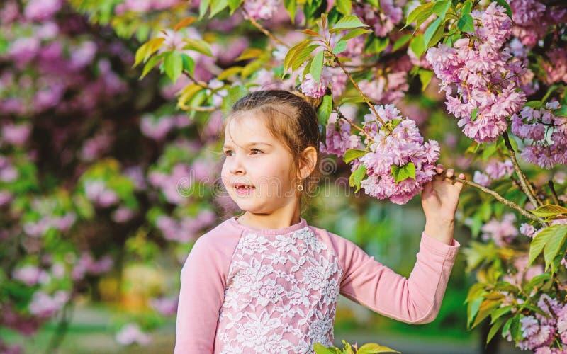 Μυρωδιά ανθών, αλλεργία το μικρό παιδί κοριτσιών ανθίζει την άνοιξη την άνθιση ευτυχές κορίτσι στο λουλούδι κερασιών Άνθιση δέντρ στοκ εικόνα
