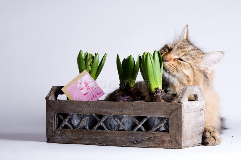 μυρωδιά φυτών γατών στοκ φωτογραφία με δικαίωμα ελεύθερης χρήσης