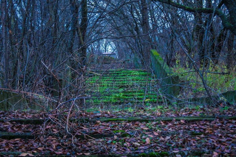 Μυστήρια βήματα backwoods στοκ φωτογραφία με δικαίωμα ελεύθερης χρήσης