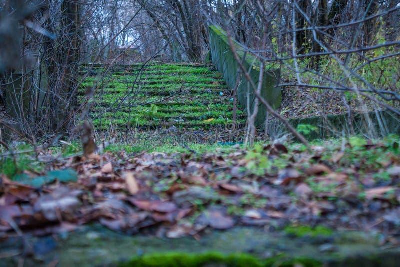 Μυστήρια βήματα backwoods στοκ εικόνα