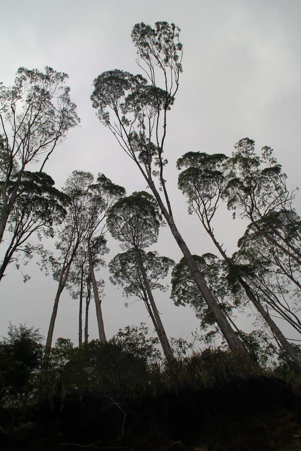 Μυστήρια ζούγκλα στοκ εικόνα