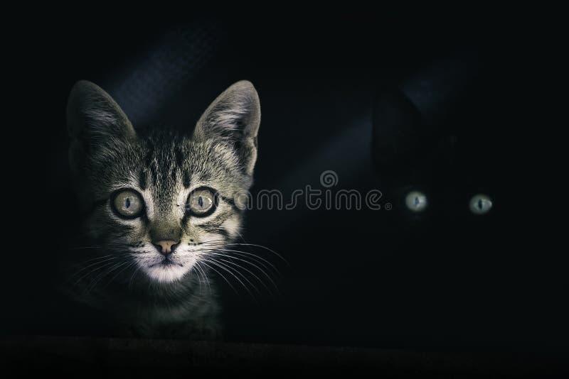 Μυστήρια μάτια γατών στο σκοτάδι στοκ εικόνες