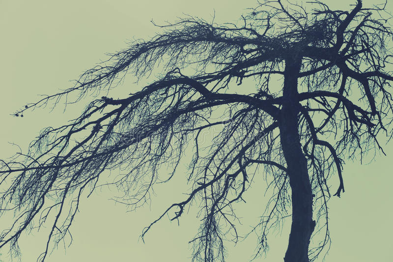 Μυστήριο δέντρο, τρομακτικό δάσος στοκ εικόνα