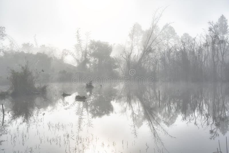 Μυστήριο δάσος στο ομιχλώδες πρωί στην περιοχή ελών στοκ εικόνα με δικαίωμα ελεύθερης χρήσης