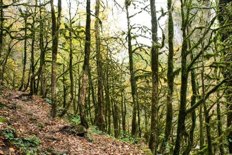 Μυστήριο, μυθικό, εκφοβίζοντας δάσος στοκ φωτογραφία με δικαίωμα ελεύθερης χρήσης