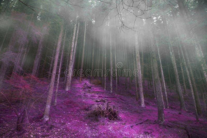 Μυστήριο ομιχλώδες δάσος με το μαγικό δρόμο, θλιβερό σκοτεινό μαγικό πρόσθιο μέρος στοκ εικόνες με δικαίωμα ελεύθερης χρήσης