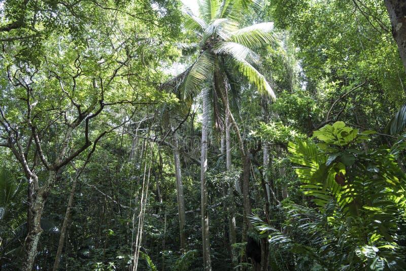 Μυστήριο, σκοτεινό δάσος ζουγκλών στα Μπαρμπάντος στοκ φωτογραφία με δικαίωμα ελεύθερης χρήσης