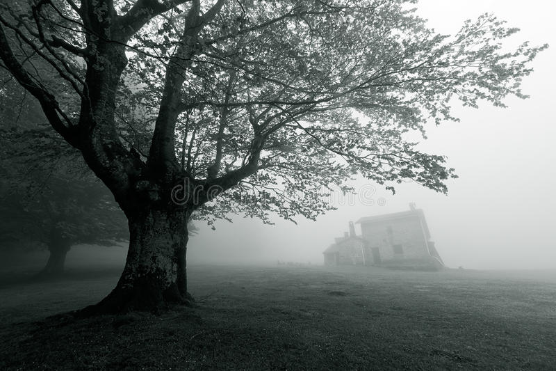 Μυστήριο σπίτι στο δάσος στοκ εικόνες με δικαίωμα ελεύθερης χρήσης