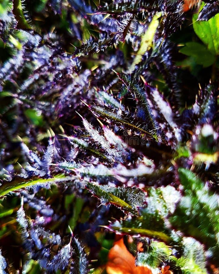 μυστήριο φυτό στοκ εικόνες με δικαίωμα ελεύθερης χρήσης