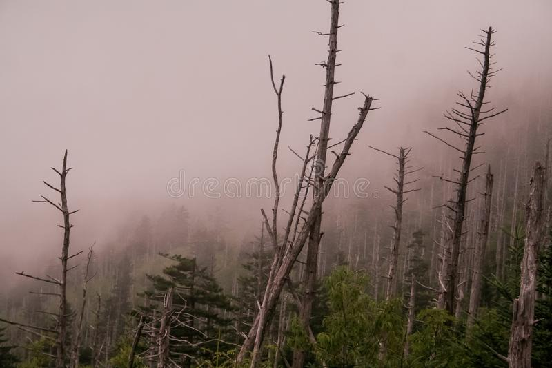 Μυστηριώδης και ομιχλώδης στα καπνώδη βουνά στοκ φωτογραφία