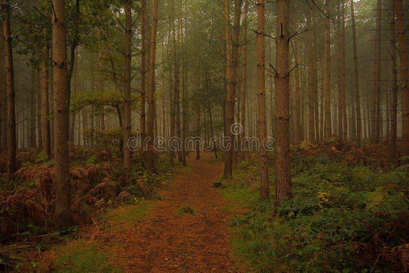 Μυστηριώδης δασώδης περιοχή στοκ εικόνα