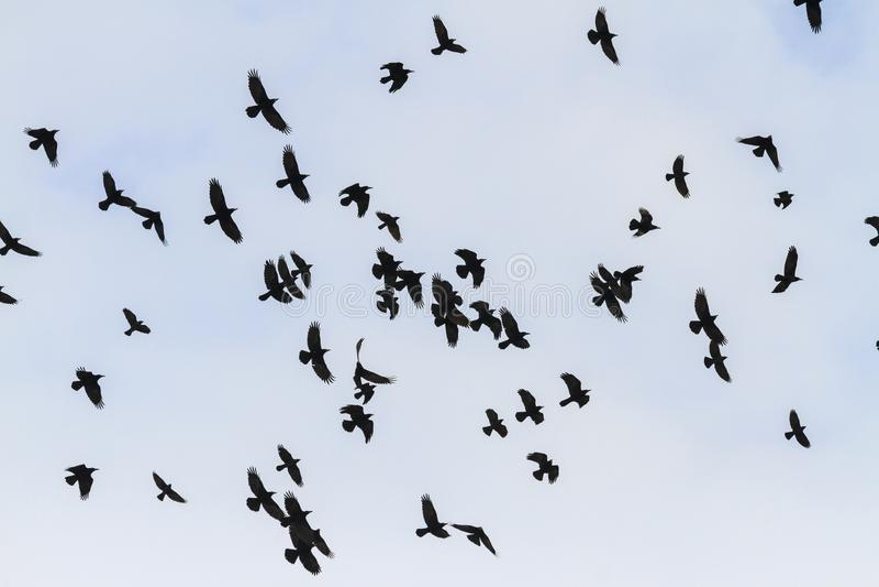 Μυστική μύγα πουλιών μέσω του ουρανού στοκ εικόνες