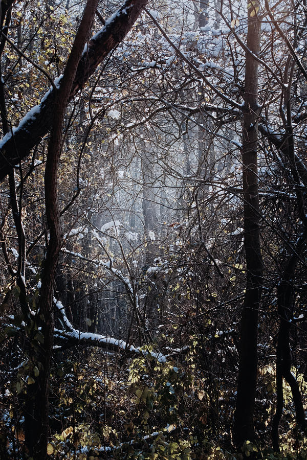 Μυστικό δάσος με το αδιαπέραστο χαμόκλαδο, γυμνά δέντρα, που εξασθενίζονται στοκ εικόνες