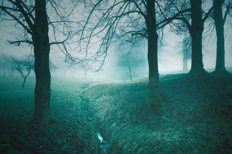 Μυστικό ομιχλώδες υπόβαθρο φαντασίας δέντρων παραμυθιού στοκ εικόνες