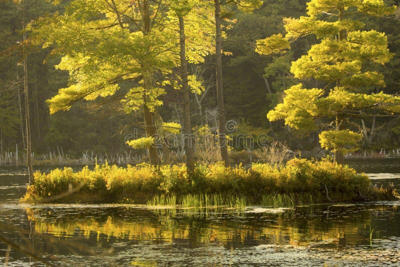 Μυστικό, χρυσό νησί στη λίμνη Breakneck, Κοννέκτικατ στοκ φωτογραφία με δικαίωμα ελεύθερης χρήσης