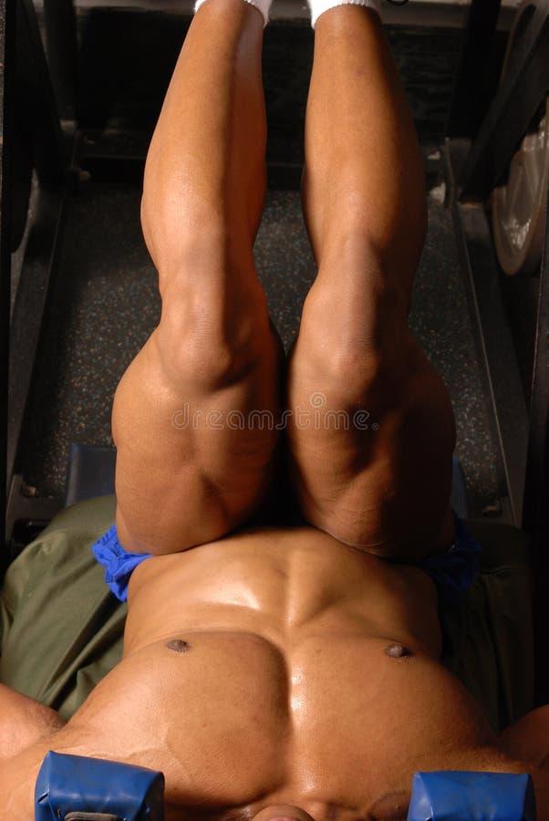 μυϊκός Τύπος 2 ποδιών ποδιών στοκ φωτογραφία