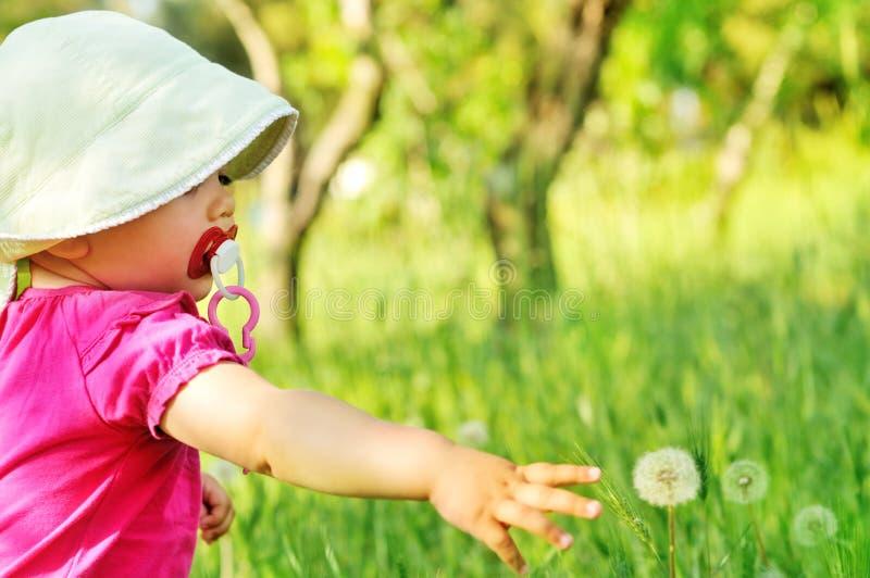 Μωρό και πικραλίδα στοκ φωτογραφίες