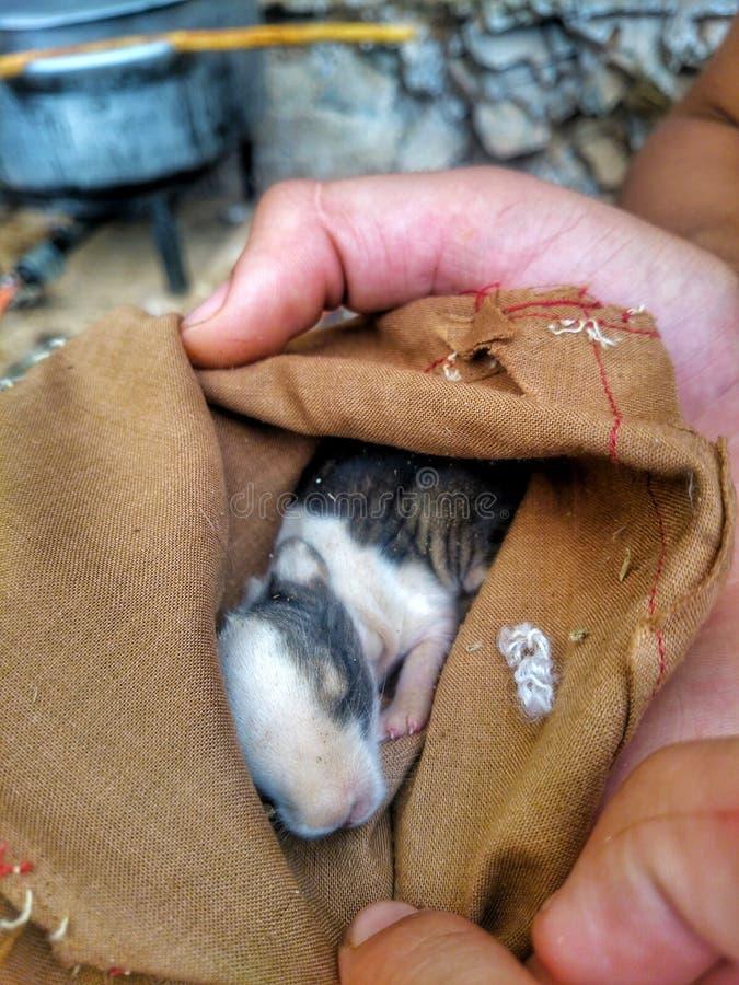 Μωρό κουνελιών στοκ εικόνες με δικαίωμα ελεύθερης χρήσης