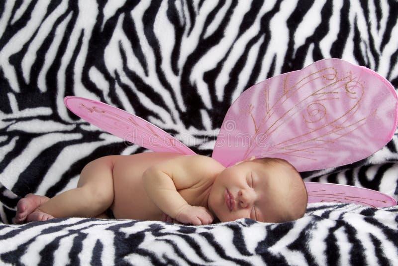 Μωρό με τα ρόδινα φτερά αγγέλου στη ζέβρ ανασκόπηση στοκ εικόνα