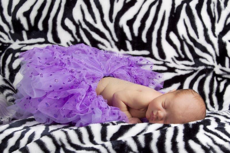 Μωρό με το πορφυρό tutu σε μια ζέβρ ανασκόπηση στοκ φωτογραφίες