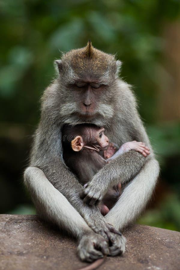 μωρό ο πίθηκός της στοκ φωτογραφία με δικαίωμα ελεύθερης χρήσης