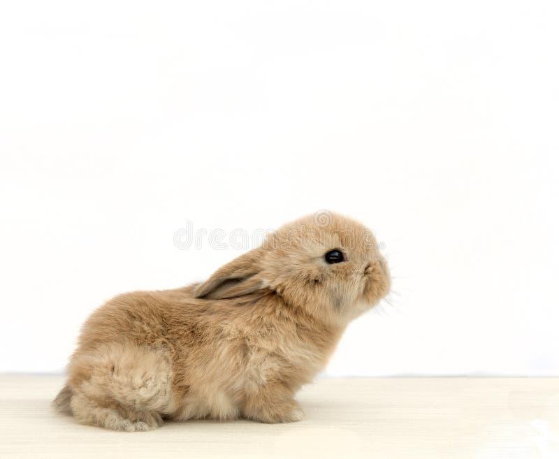 Μωρό babbit στοκ φωτογραφίες με δικαίωμα ελεύθερης χρήσης
