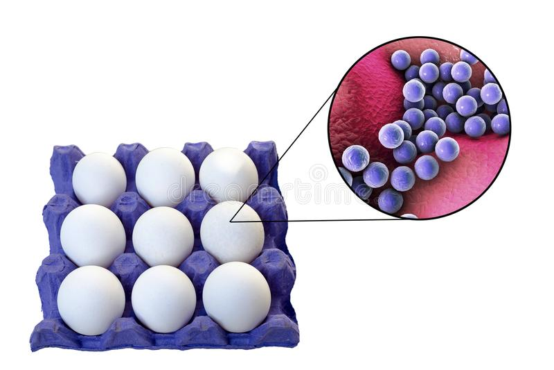 Μόλυνση των αυγών με το σταφυλόκοκκο - χρυσά βακτηρίδια, ιατρική έννοια για τη μετάδοση των staphylococcal τροφίμων στοκ εικόνα