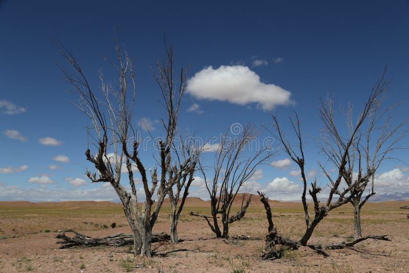 Μόνα δέντρα σε Ouarzazate στοκ φωτογραφίες με δικαίωμα ελεύθερης χρήσης