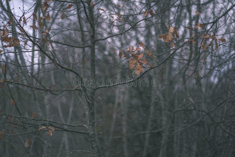 μόνα δέντρα με τα τελευταία χρωματισμένα φύλλα το χειμώνα κλάδων λίγο πριν, τα θαμπά χρώματα φθινοπώρου και το κενό πάρκο με τους στοκ φωτογραφίες με δικαίωμα ελεύθερης χρήσης