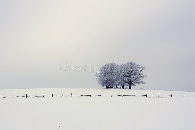 Μόνα δέντρα σε μια χιονώδη πεδιάδα στοκ εικόνα